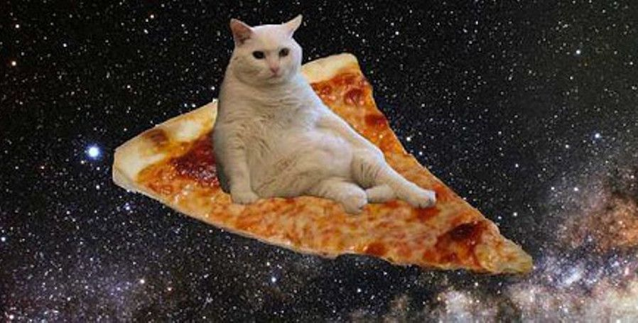20 Photos That Combine Your Love For Pizza And Cats