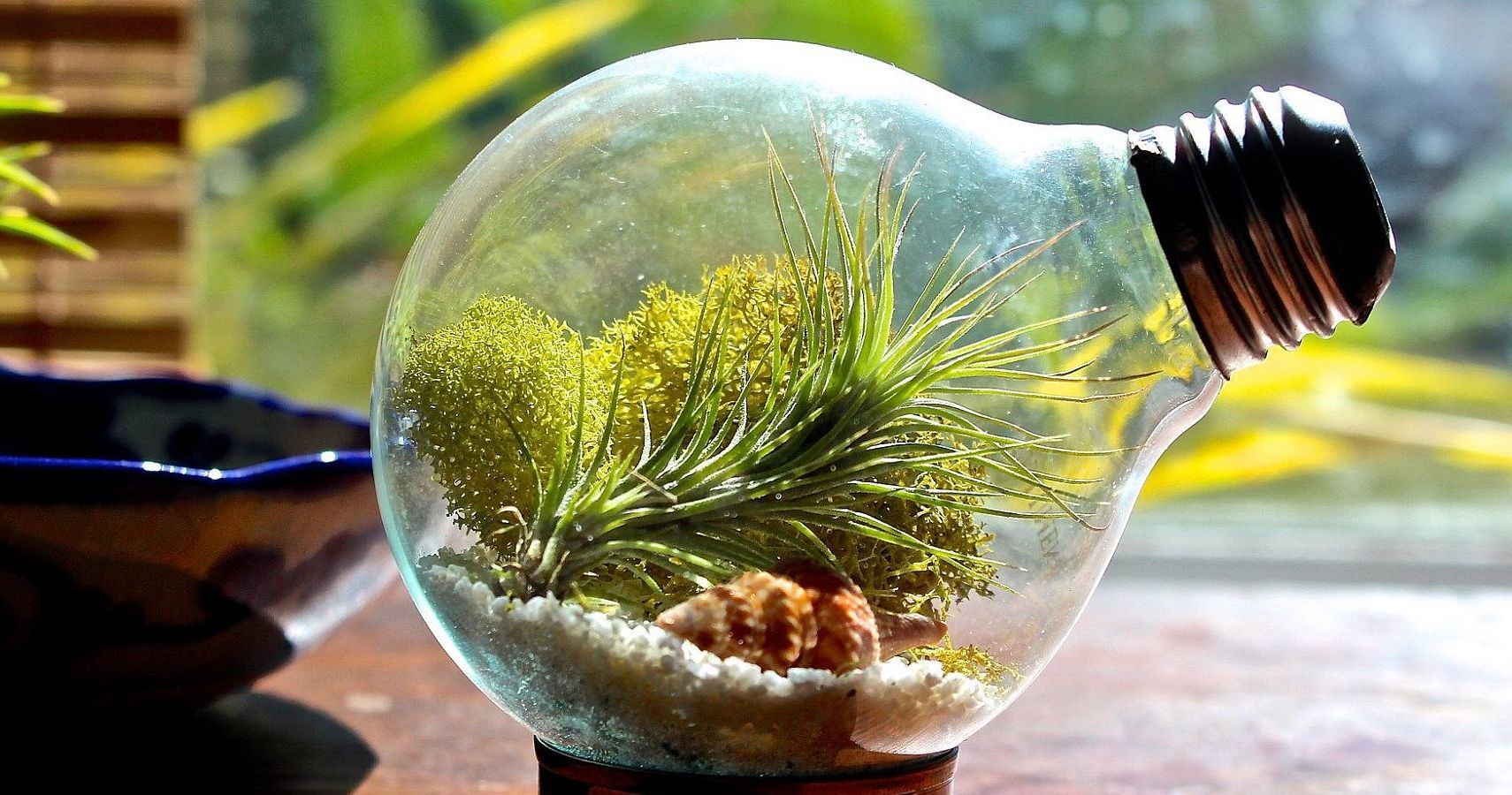 Air Plant Terrarium Diy How To Make A Beautiful Tiny Garden