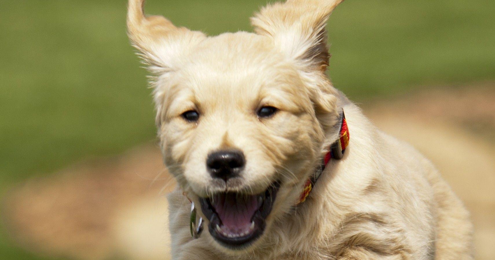 LAZY DOGZ PIPPIN DACHSHUND SASUAGE DOG MULE SLIPPERS LADIES WOMENS MEMORY FOAM