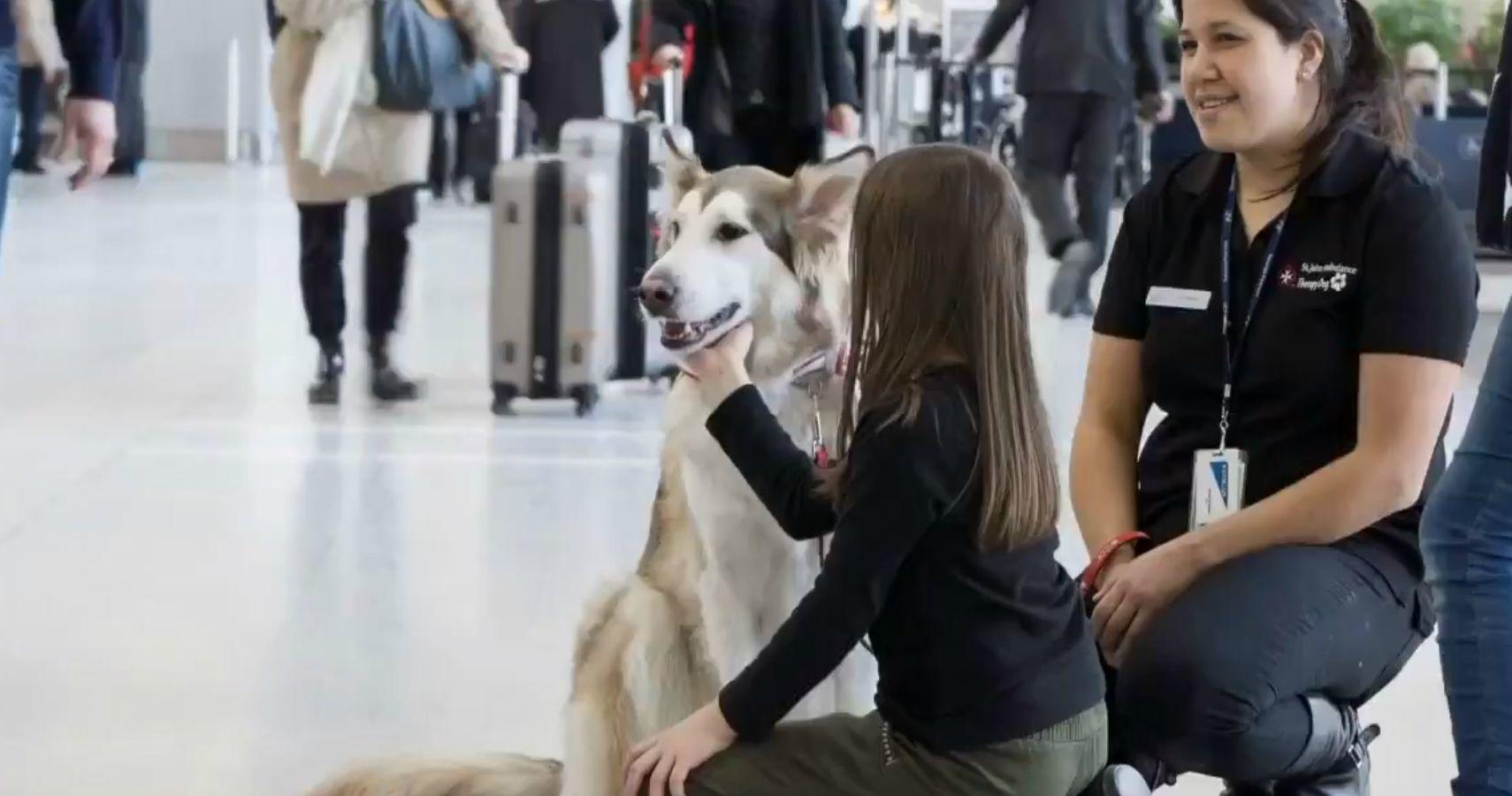 Aeroporto de Toronto contratou 15 cães para aliviar o stress dos passageiros